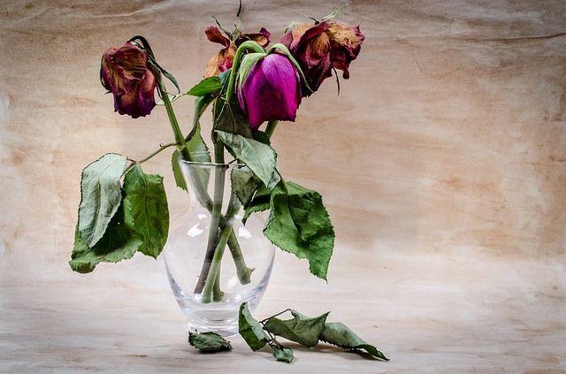 flower-316437_640_verlepte rozen.jpg