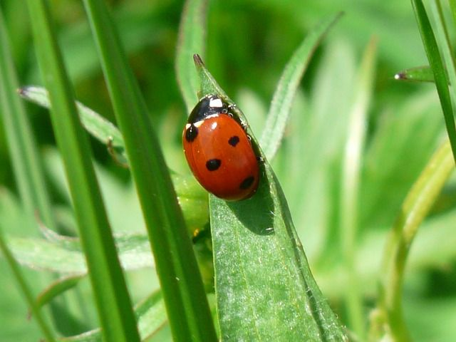 ladybug-54311_640.jpg
